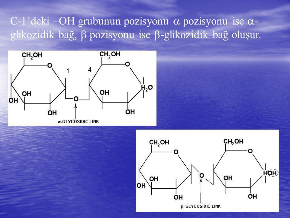 C-1'deki –OH grubunun pozisyonu  pozisyonu ise  - glikozidik bağ,  pozisyonu ise  -glikozidik bağ oluşur.