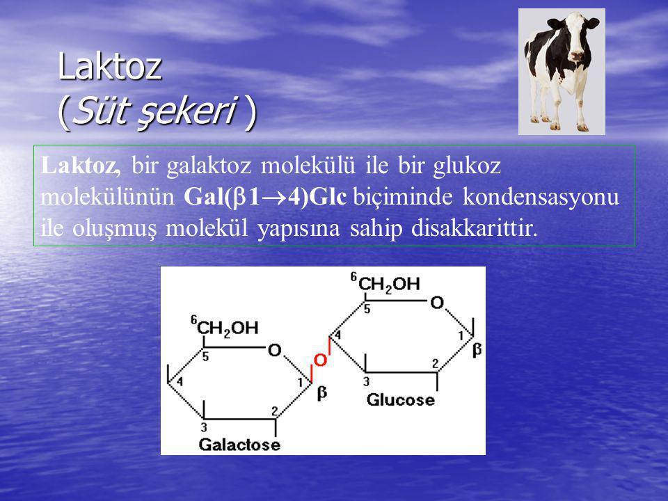 Laktoz (Süt şekeri ) Laktoz, bir galaktoz molekülü ile bir glukoz molekülünün Gal(  1  4)Glc biçiminde kondensasyonu ile oluşmuş molekül yapısına sa