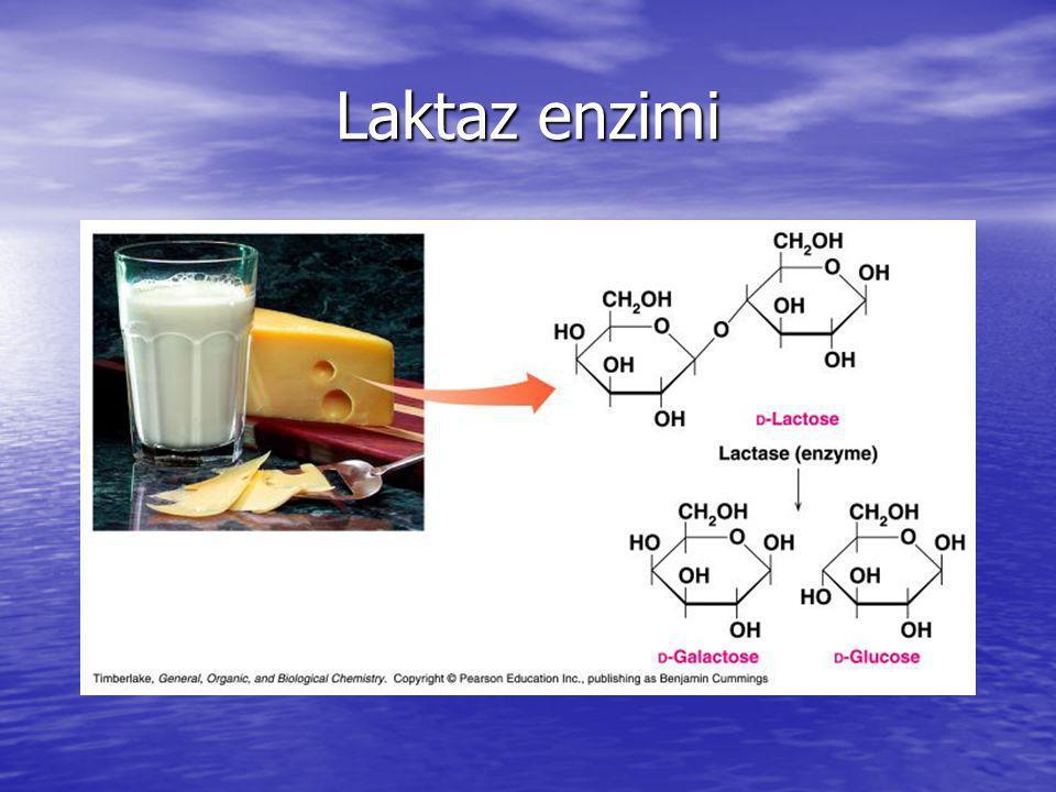 Laktaz enzimi
