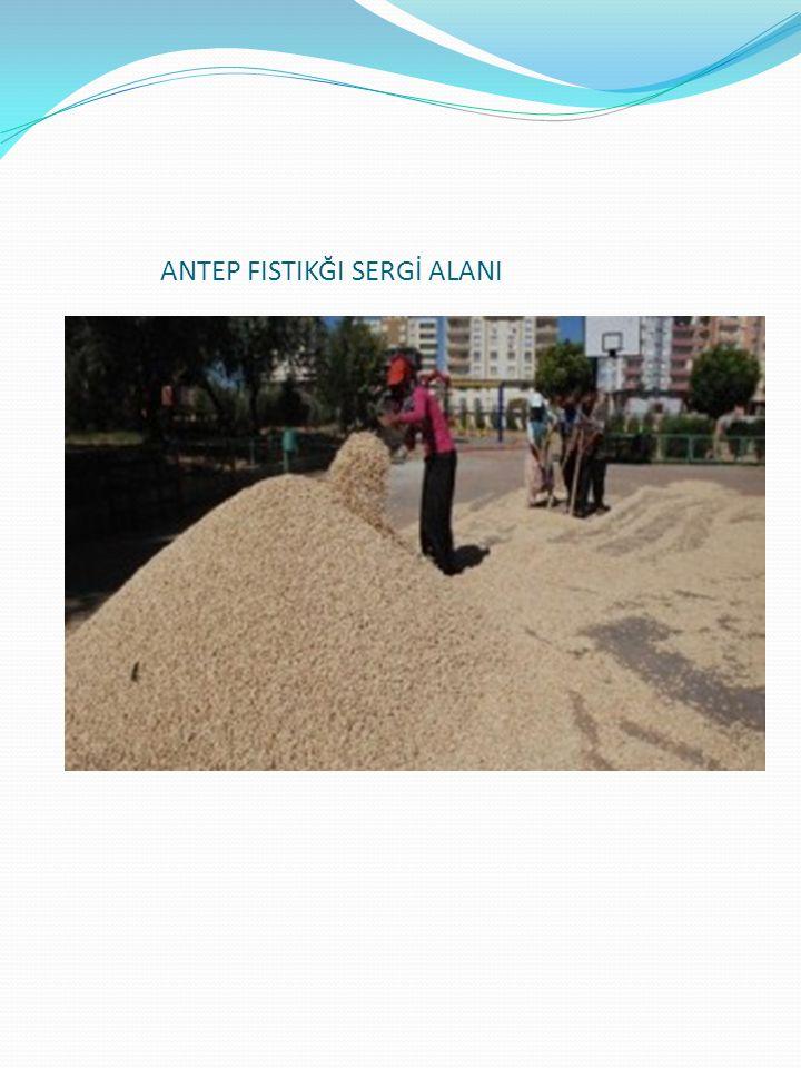 Gerekçesi ve Amacı 1- Kurutma işlemini gerçekleştirmek için yere serilen antep fıstığının toplanması için gerekli insan gücünü ortadan kaldırmak ve hasatın toplanma süresini kısaltmak.