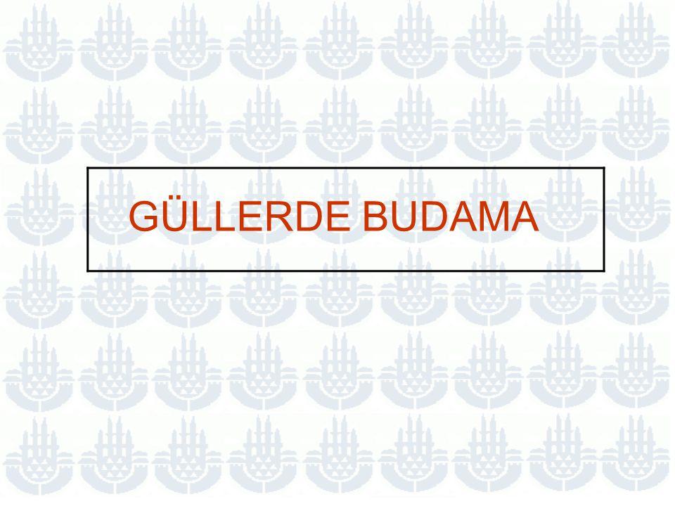 GÜLLERDE BUDAMA