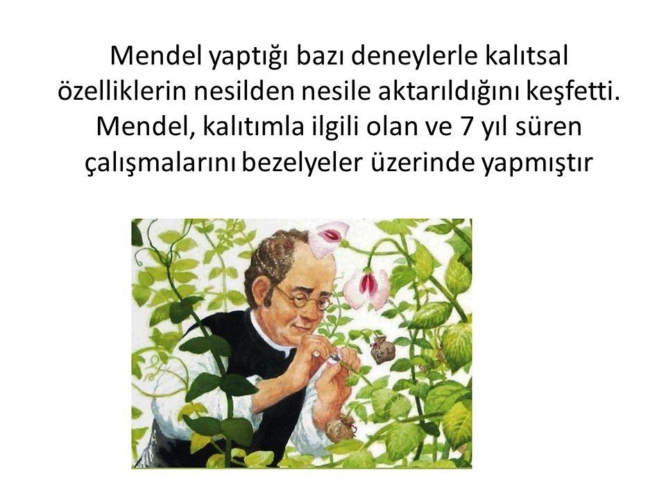Mendel yaptığı bazı deneylerle kalıtsal özelliklerin nesilden nesile aktarıldığını keşfetti. Mendel, kalıtımla ilgili olan ve 7 yıl süren çalışmaların