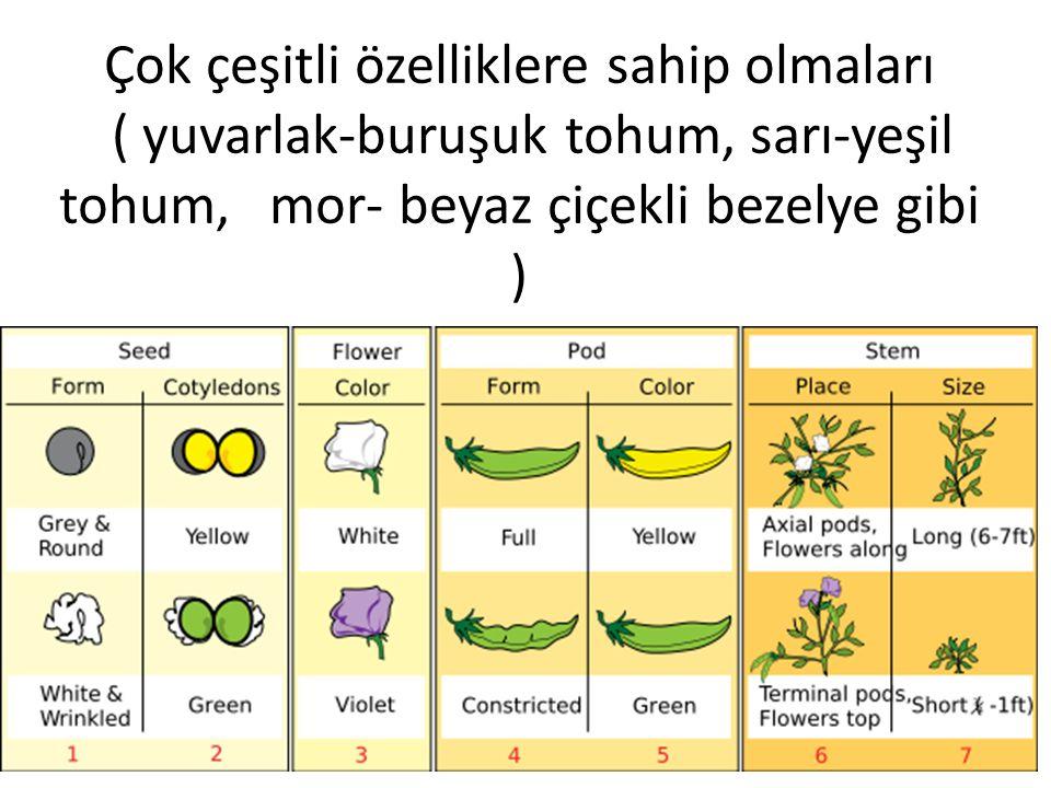 Çok çeşitli özelliklere sahip olmaları ( yuvarlak-buruşuk tohum, sarı-yeşil tohum, mor- beyaz çiçekli bezelye gibi )