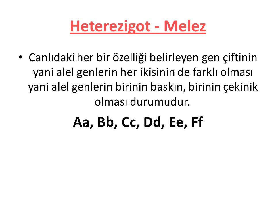 Heterezigot - Melez Canlıdaki her bir özelliği belirleyen gen çiftinin yani alel genlerin her ikisinin de farklı olması yani alel genlerin birinin bas