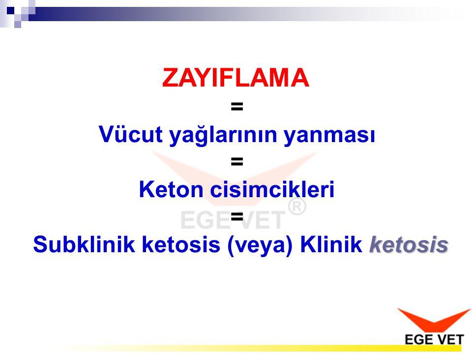 ZAYIFLAMA = Vücut yağlarının yanması = Keton cisimcikleri ketosis = Subklinik ketosis (veya) Klinik ketosis