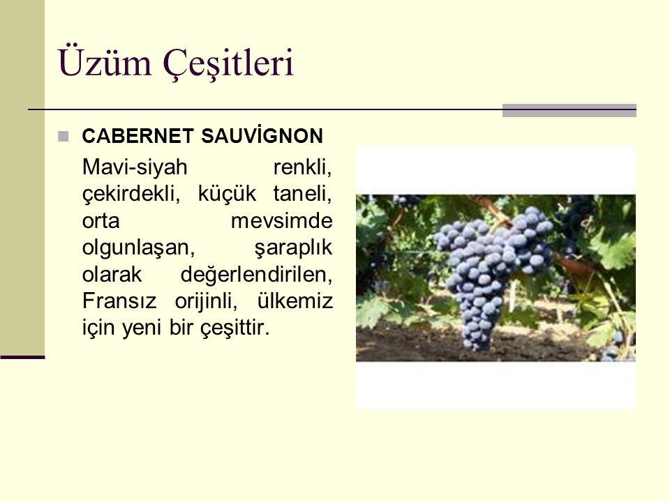 Üzüm Çeşitleri CABERNET SAUVİGNON Mavi-siyah renkli, çekirdekli, küçük taneli, orta mevsimde olgunlaşan, şaraplık olarak değerlendirilen, Fransız orij