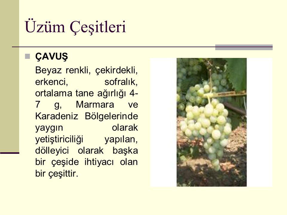 Üzüm Çeşitleri ÇAVUŞ Beyaz renkli, çekirdekli, erkenci, sofralık, ortalama tane ağırlığı 4- 7 g, Marmara ve Karadeniz Bölgelerinde yaygın olarak yetiş