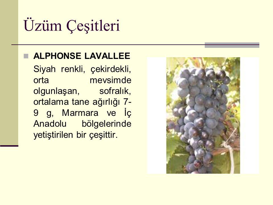 Üzüm Çeşitleri ALPHONSE LAVALLEE Siyah renkli, çekirdekli, orta mevsimde olgunlaşan, sofralık, ortalama tane ağırlığı 7- 9 g, Marmara ve İç Anadolu bö