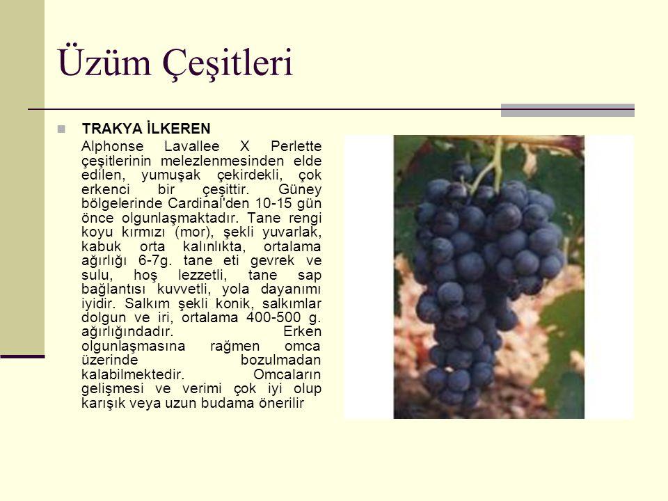 Üzüm Çeşitleri TRAKYA İLKEREN Alphonse Lavallee X Perlette çeşitlerinin melezlenmesinden elde edilen, yumuşak çekirdekli, çok erkenci bir çeşittir. Gü