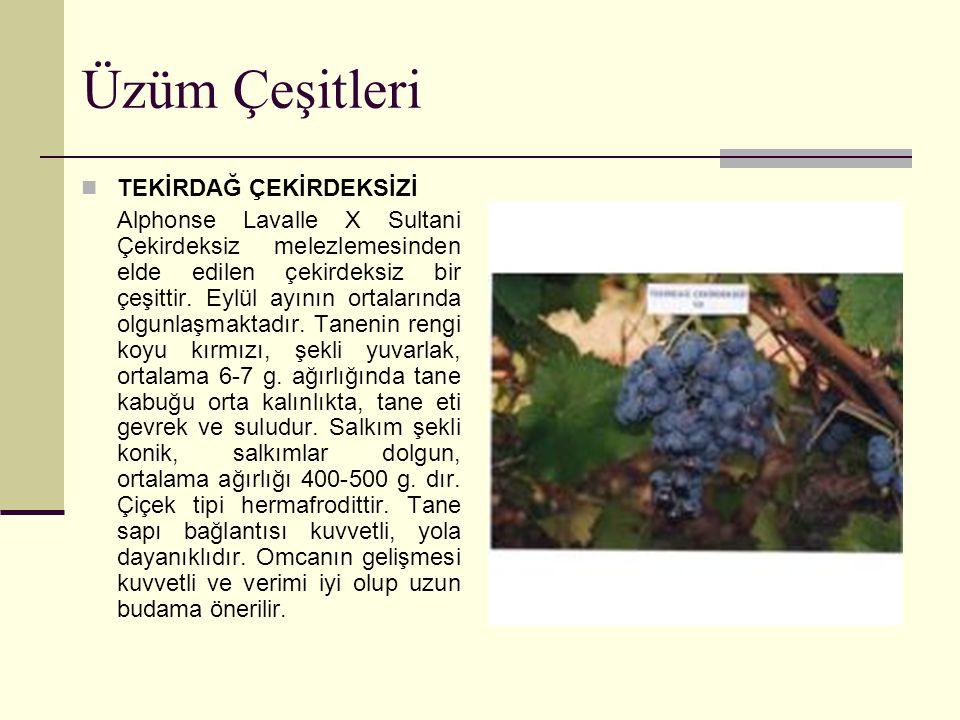 Üzüm Çeşitleri TEKİRDAĞ ÇEKİRDEKSİZİ Alphonse Lavalle X Sultani Çekirdeksiz melezlemesinden elde edilen çekirdeksiz bir çeşittir. Eylül ayının ortalar