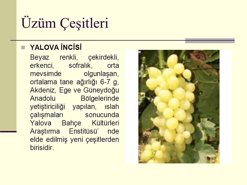 Üzüm Çeşitleri YALOVA İNCİSİ Beyaz renkli, çekirdekli, erkenci, sofralık, orta mevsimde olgunlaşan, ortalama tane ağırlığı 6-7 g, Akdeniz, Ege ve Güne
