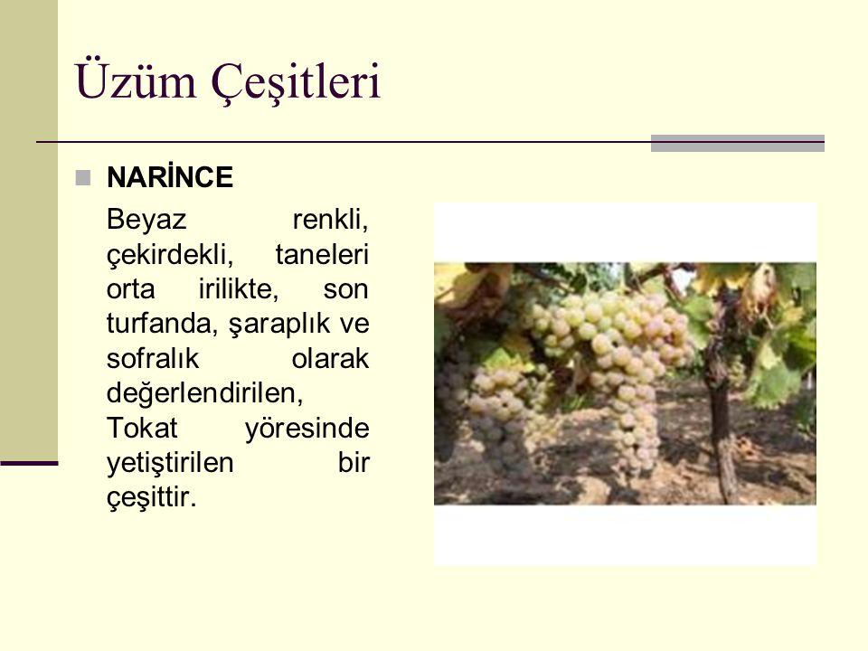 Üzüm Çeşitleri CINSAUT Mavi-siyah renkli, çekirdekli, orta taneli, orta mevsimde olgunlaşan, şaraplık olarak değerlendirilen, Tekirdağ ve Çanakkale illerinde yetiştirilen bir çeşittir.