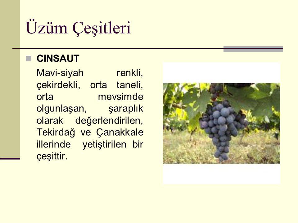 Üzüm Çeşitleri MERLOT Mavi-siyah renkli, çekirdekli, küçük taneli, orta mevsimde olgunlaşan, şaraplık olarak değerlendirilen, Marmara ve Ege Bölgesinde yetiştirilen bir çeşittir.