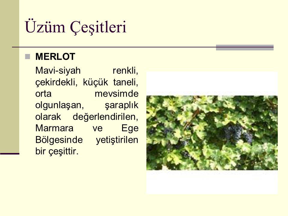 Üzüm Çeşitleri MERLOT Mavi-siyah renkli, çekirdekli, küçük taneli, orta mevsimde olgunlaşan, şaraplık olarak değerlendirilen, Marmara ve Ege Bölgesind