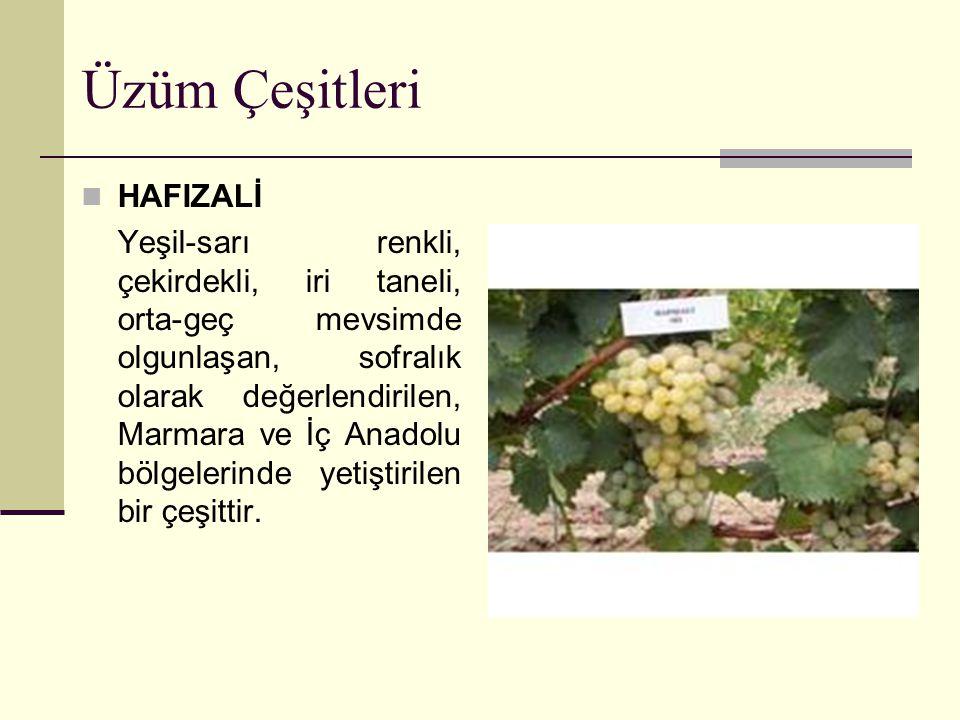 Üzüm Çeşitleri HAMBURG MİSKETİ Siyah renkli, çekirdekli, orta mevsimde olgunlaşan sofralık ve şaraplık, ortalama tane ağırlığı 4-5 g, Marmara ve İç Anadolu bölgelerinde yetiştirilen bir çeşittir.