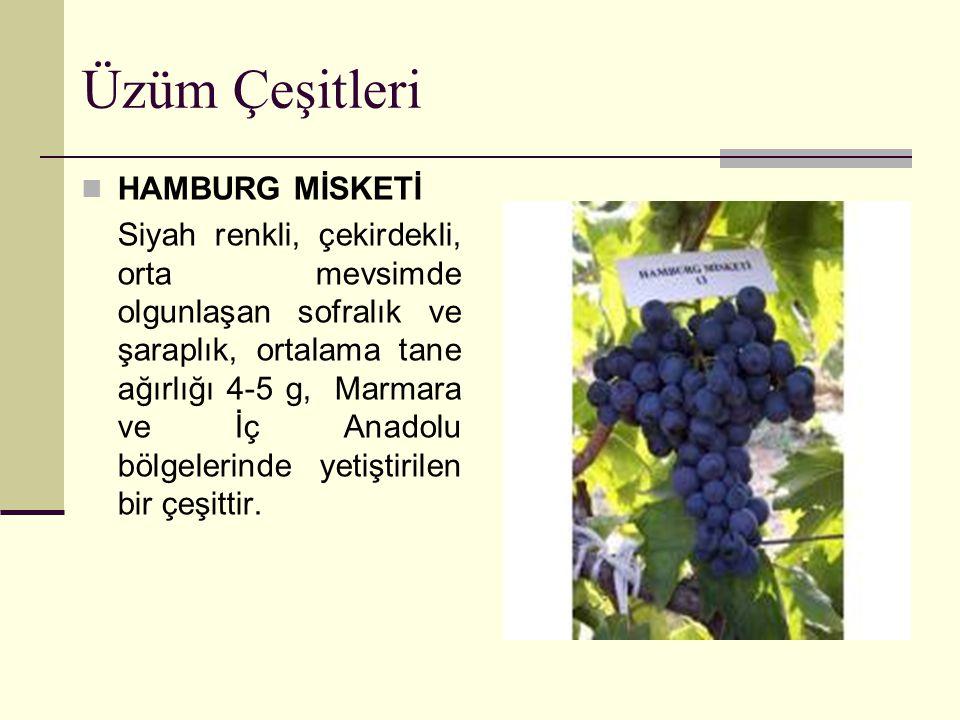 Üzüm Çeşitleri HAMBURG MİSKETİ Siyah renkli, çekirdekli, orta mevsimde olgunlaşan sofralık ve şaraplık, ortalama tane ağırlığı 4-5 g, Marmara ve İç An