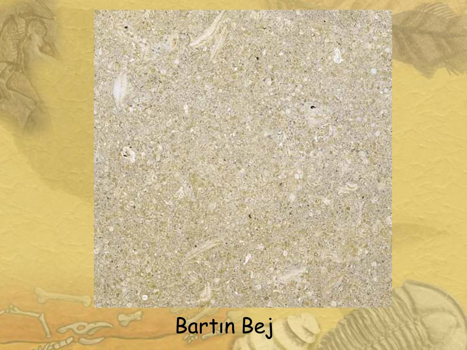 Kastamonu-Eflani Bej Mermer Karabük-Eflani/Esencik Köyü Litoloji v e Özellikleri Geç Paleosen-Orta Eosen yaşlı Eflani Bej mermeri litolojik olarak fosilli biyomikritik kireçtaşı şeklinde tanımlanır.