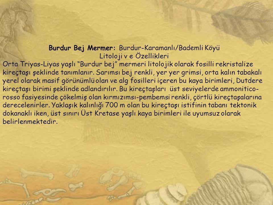 """Burdur Bej Mermer: Burdur-Karamanlı/Bademli Köyü Litoloji v e Özellikleri Orta Triyas-Liyas yaşlı """"Burdur bej"""" mermeri litolojik olarak fosilli rekris"""