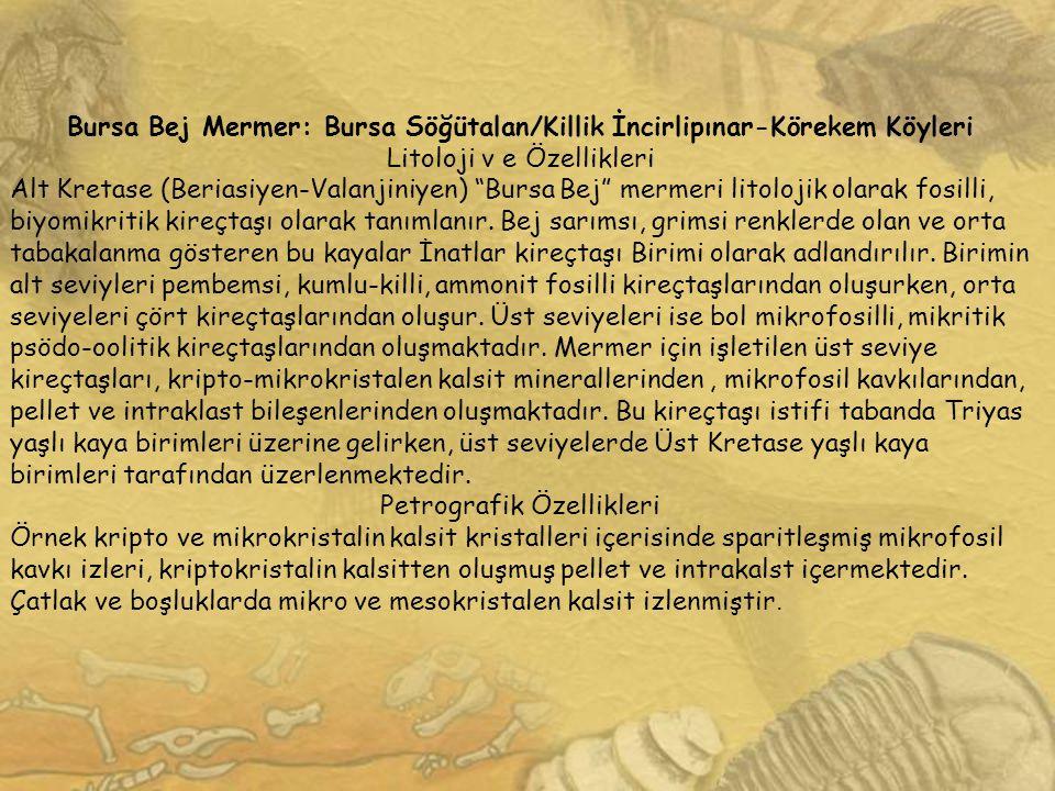 Bursa Bej