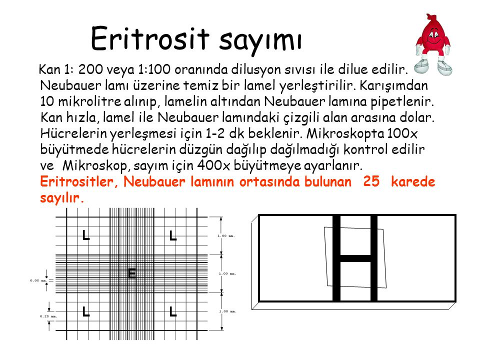 Eritrosit sayımı Kan 1: 200 veya 1:100 oranında dilusyon sıvısı ile dilue edilir. Neubauer lamı üzerine temiz bir lamel yerleştirilir. Karışımdan 10 m