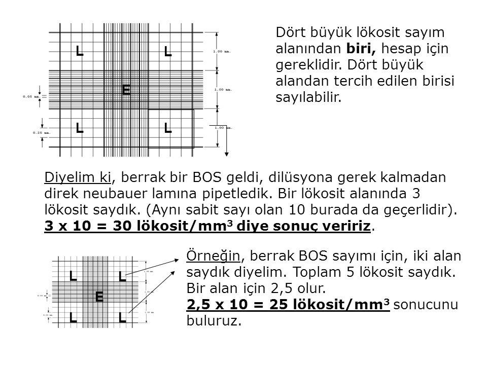 Dört büyük lökosit sayım alanından biri, hesap için gereklidir. Dört büyük alandan tercih edilen birisi sayılabilir. LL L L E Diyelim ki, berrak bir B
