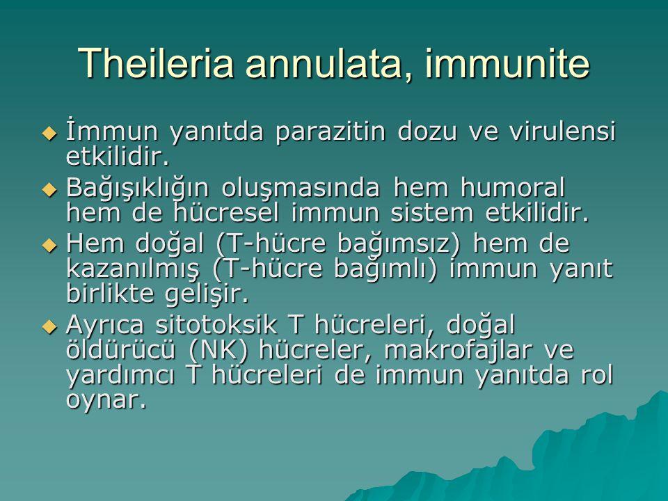 Theileria annulata, immunite  İmmun yanıtda parazitin dozu ve virulensi etkilidir.  Bağışıklığın oluşmasında hem humoral hem de hücresel immun siste