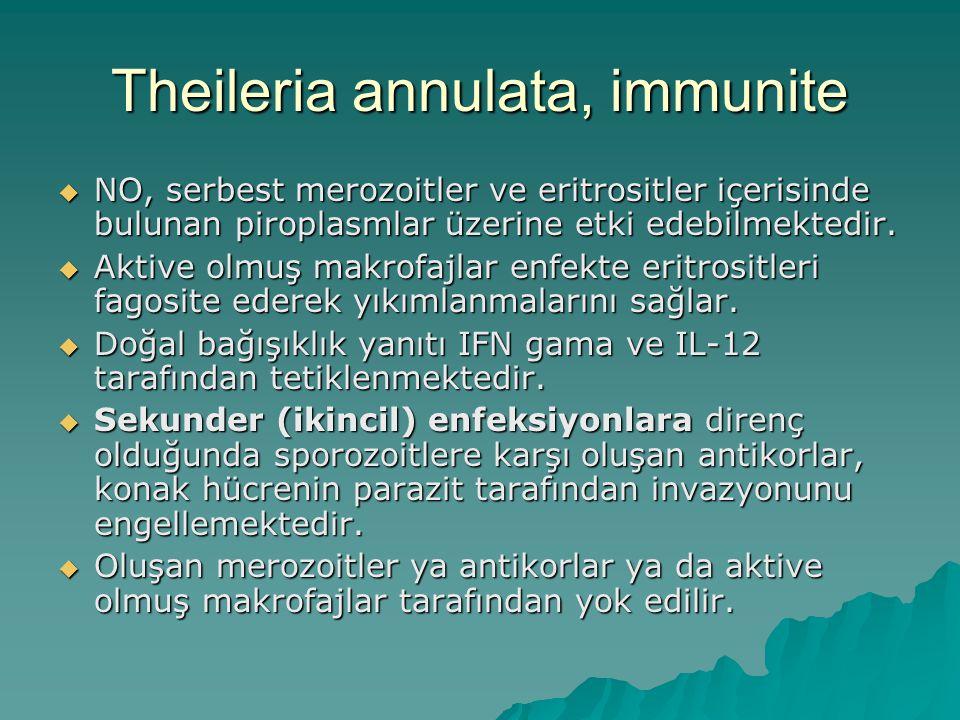 Theileria annulata, immunite  NO, serbest merozoitler ve eritrositler içerisinde bulunan piroplasmlar üzerine etki edebilmektedir.  Aktive olmuş mak
