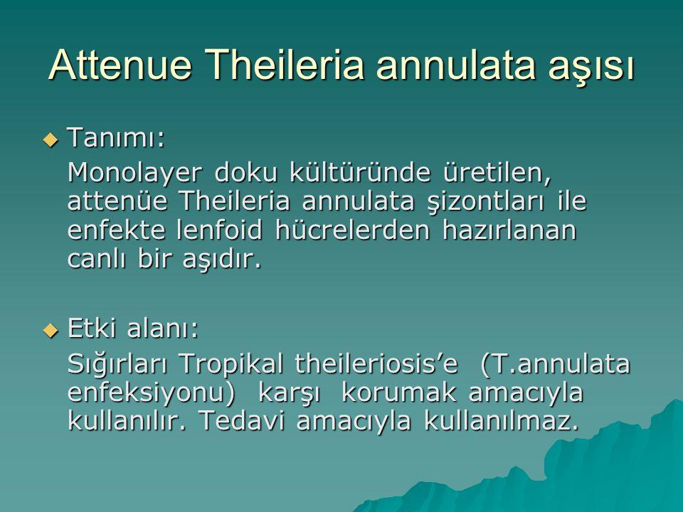 Attenue Theileria annulata aşısı  Tanımı: Monolayer doku kültüründe üretilen, attenüe Theileria annulata şizontları ile enfekte lenfoid hücrelerden h