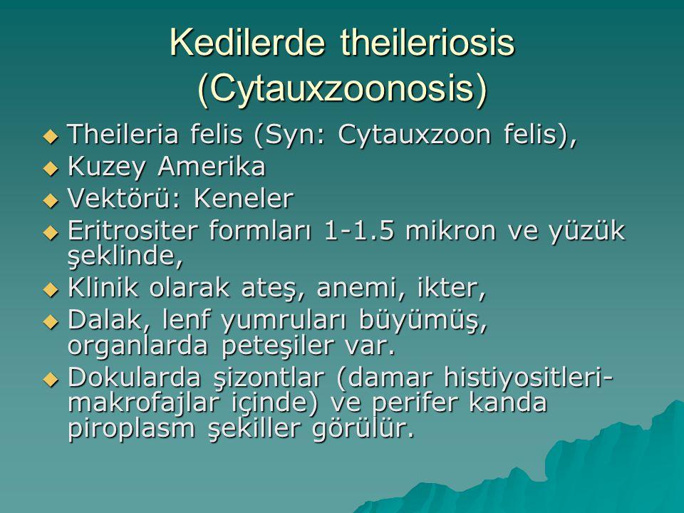 Kedilerde theileriosis (Cytauxzoonosis)  Theileria felis (Syn: Cytauxzoon felis),  Kuzey Amerika  Vektörü: Keneler  Eritrositer formları 1-1.5 mik