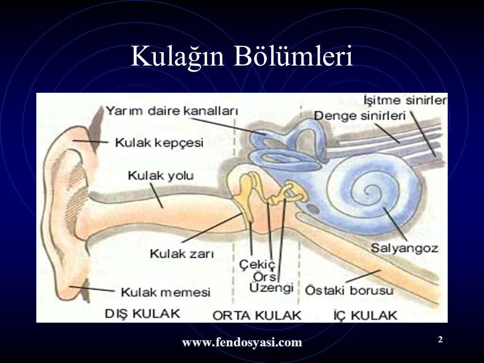www.fendosyasi.com 1 İşitme İşitme Organımız KULAK Çevremizi tanımada gözden sonra bize en çok yardımcı olan duyu organımızdır.