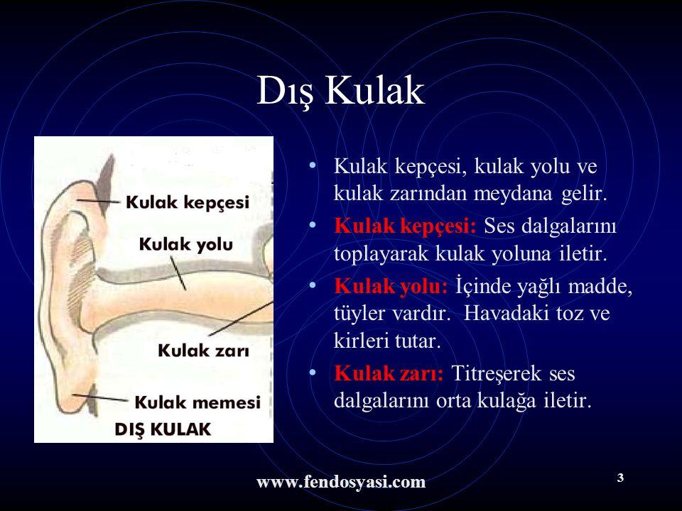 www.fendosyasi.com 2 Kulağın Bölümleri