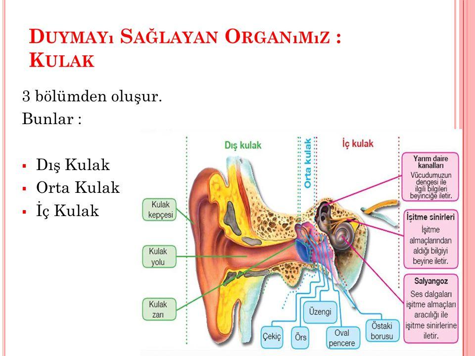 D UYMAYı S AĞLAYAN O RGANıMıZ : K ULAK 3 bölümden oluşur. Bunlar :  Dış Kulak  Orta Kulak  İç Kulak