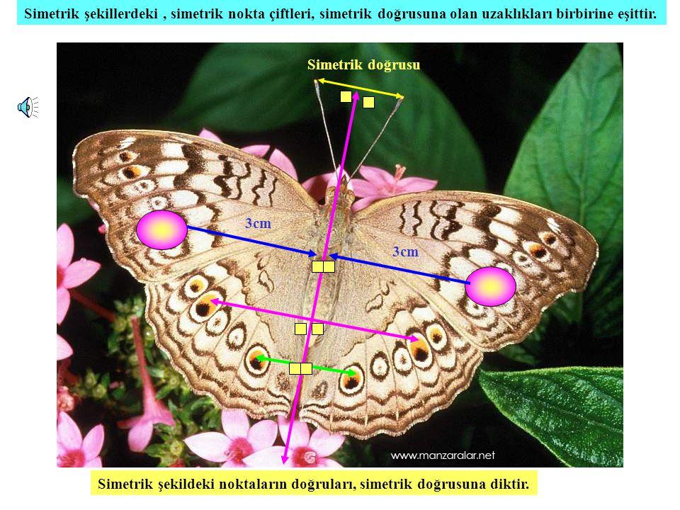PARALELKENARIN SİMETRİ DOĞRULARI Sizce simetrik doğrusu mudur .