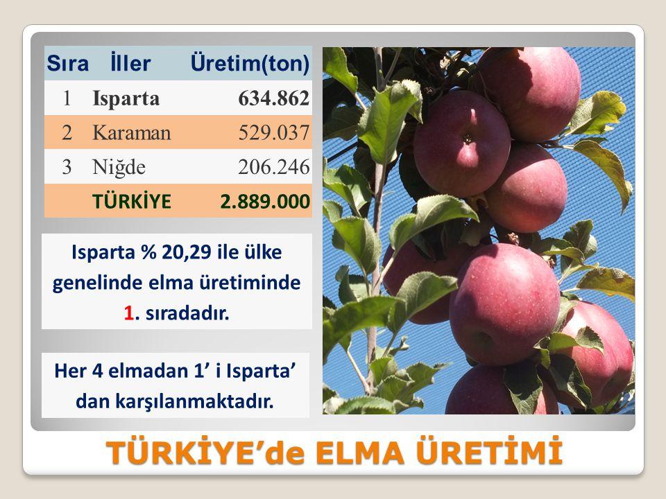 TÜRKİYE'de ELMA ÜRETİMİ Sıra İllerÜretim(ton) 1Isparta634.862 2Karaman529.037 3Niğde206.246 TÜRKİYE2.889.000 Isparta % 20,29 ile ülke genelinde elma üretiminde 1.