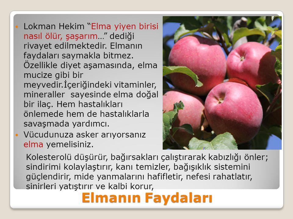 Elmanın Faydaları Lokman Hekim Elma yiyen birisi nasıl ölür, şaşarım… dediği rivayet edilmektedir.