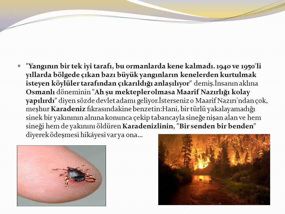 Yangının bir tek iyi tarafı, bu ormanlarda kene kalmadı.