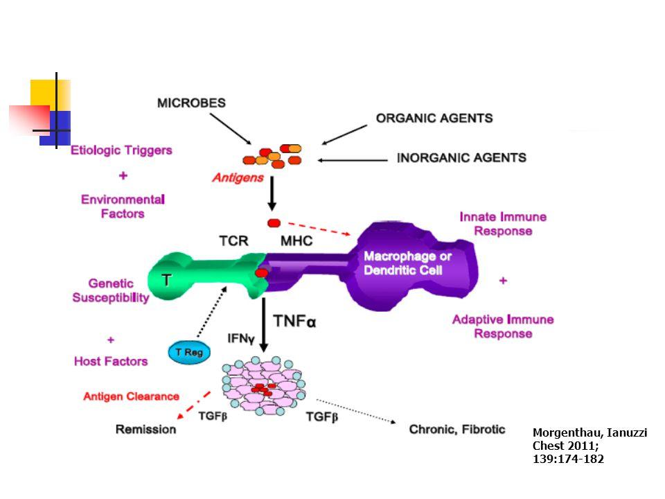 Kalıcı/uzun süreli granülomatöz inflamasyon İnflamatuar süreci sınırlayan immün düzenleyici mekanizmaların yetersizliği .