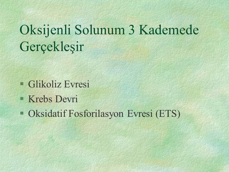 Oksijenli Solunum 3 Kademede Gerçekleşir §Glikoliz Evresi §Krebs Devri §Oksidatif Fosforilasyon Evresi (ETS)