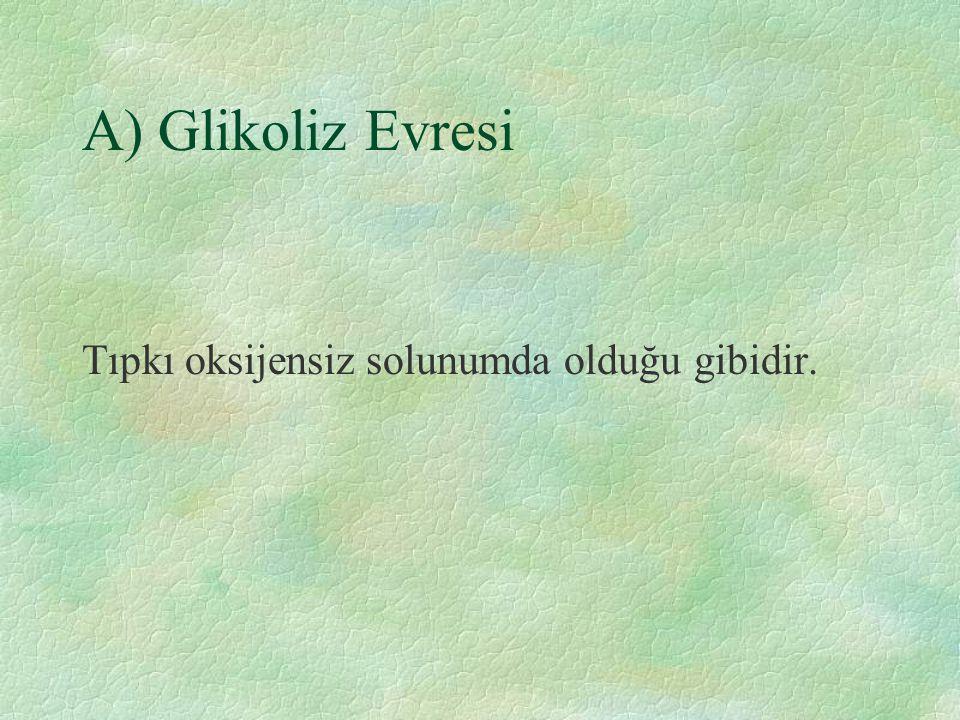 A) Glikoliz Evresi Tıpkı oksijensiz solunumda olduğu gibidir.