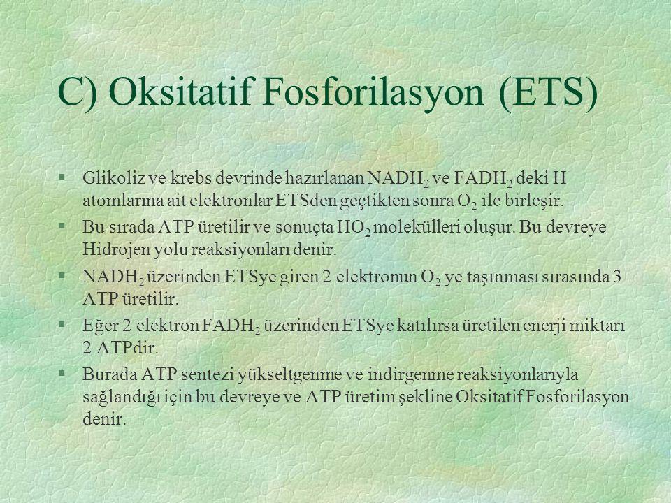 C) Oksitatif Fosforilasyon (ETS) §Glikoliz ve krebs devrinde hazırlanan NADH 2 ve FADH 2 deki H atomlarına ait elektronlar ETSden geçtikten sonra O 2 ile birleşir.