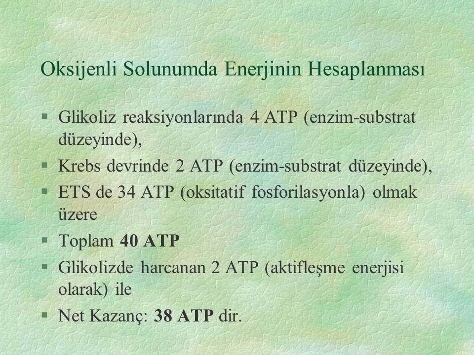 Oksijenli Solunumda Enerjinin Hesaplanması §Glikoliz reaksiyonlarında 4 ATP (enzim-substrat düzeyinde), §Krebs devrinde 2 ATP (enzim-substrat düzeyinde), §ETS de 34 ATP (oksitatif fosforilasyonla) olmak üzere §Toplam 40 ATP §Glikolizde harcanan 2 ATP (aktifleşme enerjisi olarak) ile §Net Kazanç: 38 ATP dir.
