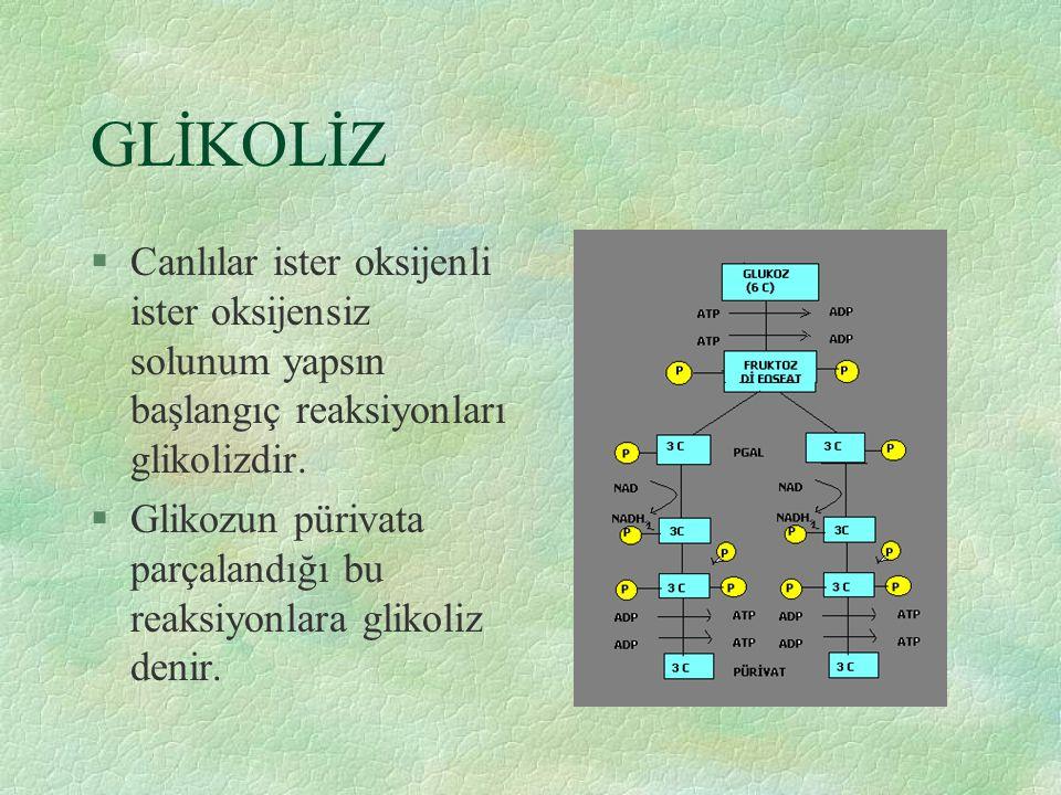 GLİKOLİZ §Canlılar ister oksijenli ister oksijensiz solunum yapsın başlangıç reaksiyonları glikolizdir. §Glikozun pürivata parçalandığı bu reaksiyonla