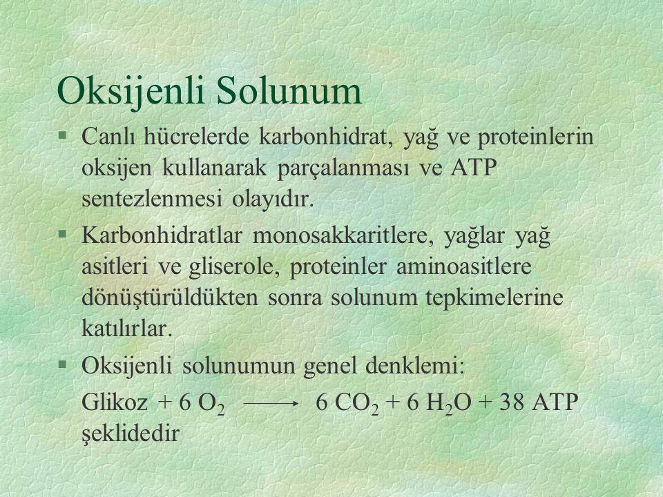 Oksijenli Solunum §Canlı hücrelerde karbonhidrat, yağ ve proteinlerin oksijen kullanarak parçalanması ve ATP sentezlenmesi olayıdır.