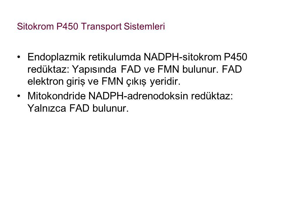 Sitokrom P450 Transport Sistemleri Endoplazmik retikulumda NADPH-sitokrom P450 redüktaz: Yapısında FAD ve FMN bulunur. FAD elektron giriş ve FMN çıkış