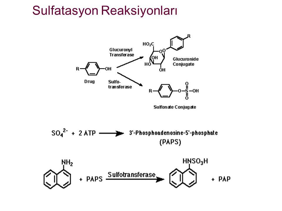 Sulfatasyon Reaksiyonları