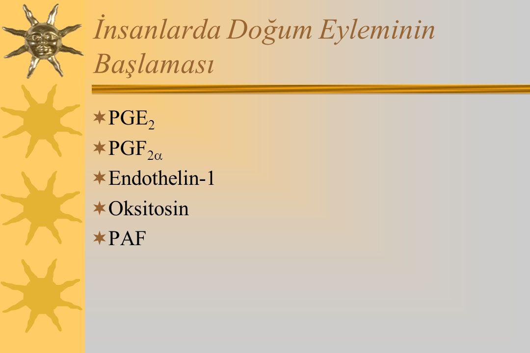 İnsanlarda Doğum Eyleminin Başlaması  PGE 2  PGF 2   Endothelin-1  Oksitosin  PAF