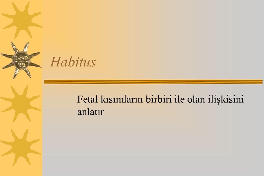 Habitus Fetal kısımların birbiri ile olan ilişkisini anlatır