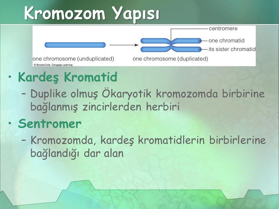 Kromozom Yapısı Kardeş Kromatid –Duplike olmuş Ökaryotik kromozomda birbirine bağlanmış zincirlerden herbiri Sentromer –Kromozomda, kardeş kromatidlerin birbirlerine bağlandığı dar alan