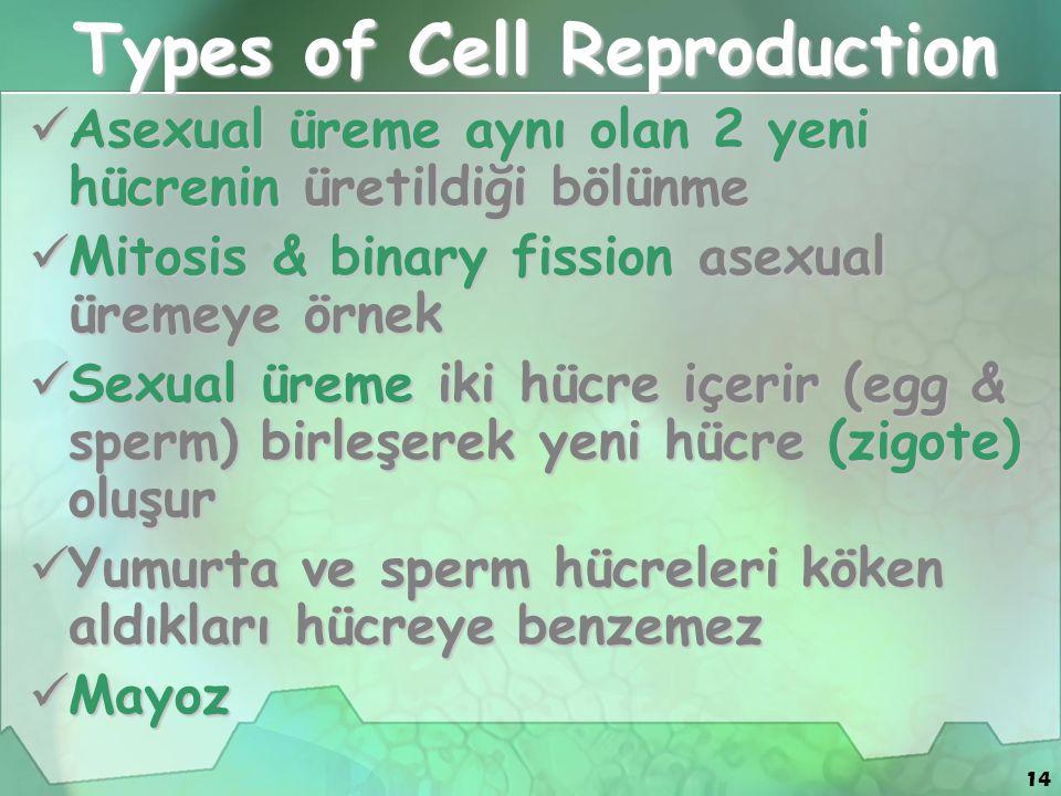 14 Types of Cell Reproduction Asexual üreme aynı olan 2 yeni hücrenin üretildiği bölünme Asexual üreme aynı olan 2 yeni hücrenin üretildiği bölünme Mi
