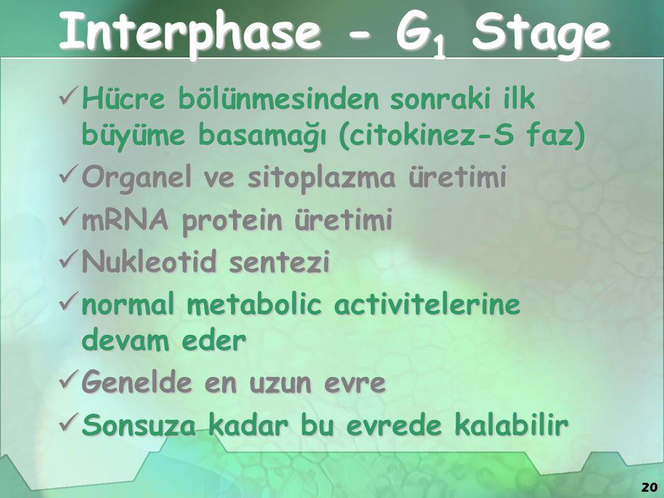 20 Interphase - G 1 Stage Hücre bölünmesinden sonraki ilk büyüme basamağı (citokinez-S faz) Hücre bölünmesinden sonraki ilk büyüme basamağı (citokinez